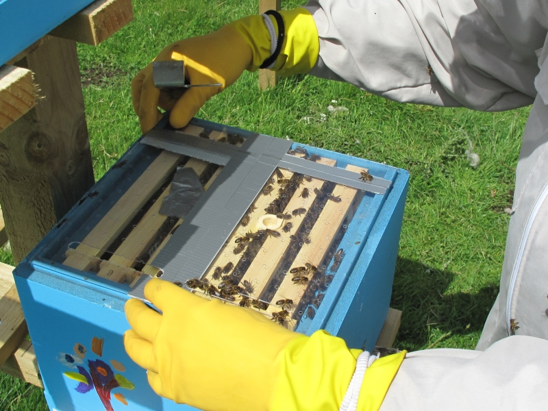 Miniplus nucs at Glendevon Isolated Mating Apiary 003