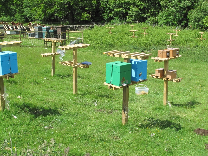 Miniplus nucs at Glendevon Isolated Mating Apiary 006